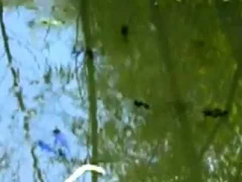 """Baby Catfish """"Like In A Tide Pool"""" #3"""