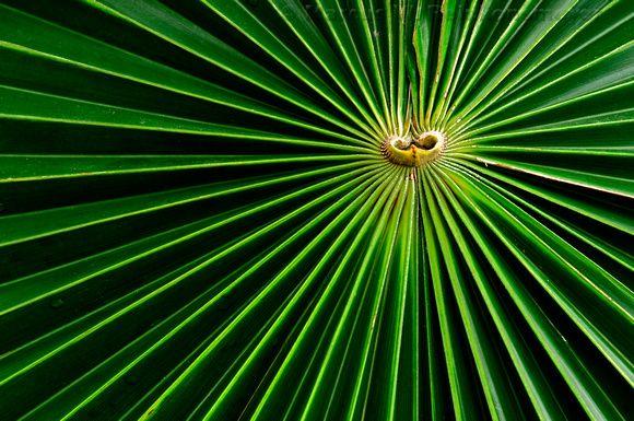 Meijer S Garden Grand Rapids Michigan Patterns In Life