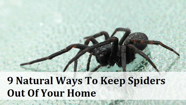 Let's be completely honest. Nobody REALLY likes spiders. Even if they are completely harmless little things, nobody really wants spiders hanging around inside their house. But, how do you repel them naturally with