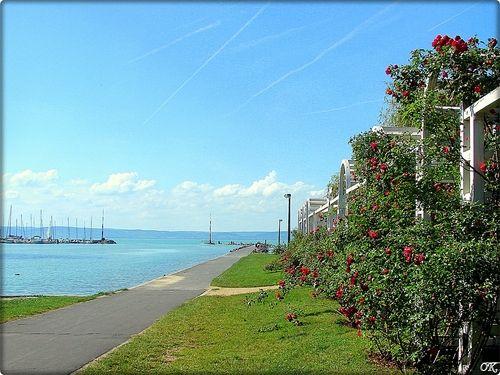 Siófok Rózsakert -Rose garden and Balaton lake