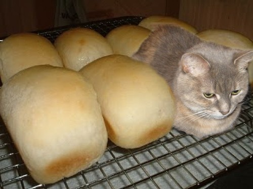 KITTEN & BREAD
