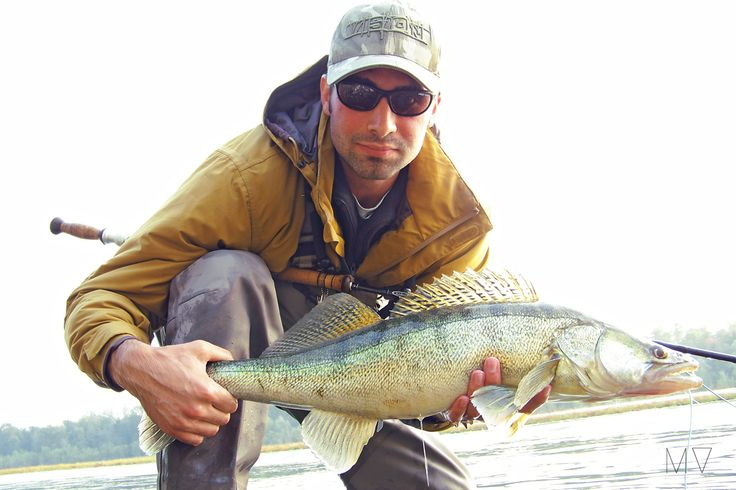 Big zander with small fly #flyfishing #fishing #zander #italy