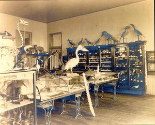 While a teacher at SHS, Professor Moseley operated a natural history museum in the school building, managing a collection of about 17,000 specimens.