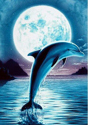 Dolphin Jumping In The Moonlight