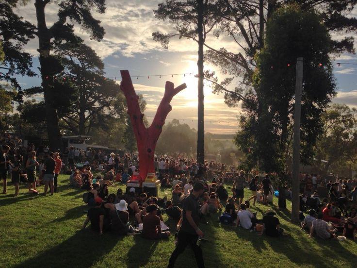 !!!! MEREDITH MUSIC FESTIVAL DECEMBER Red Tree
