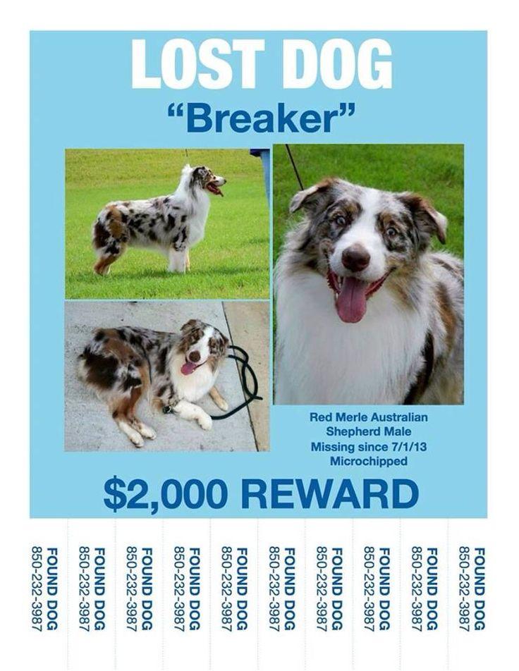1000 Images About Australian Shepherds Us Lost Dog Registry On Pinterest