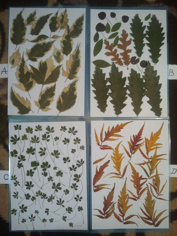 Pressed leaves Wedding table decor  14026 by DraculasGarden