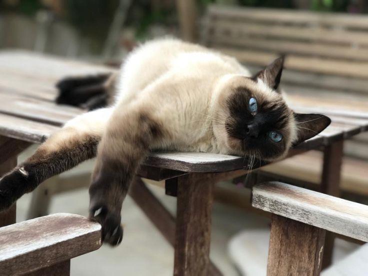 No está mal modo #Retrato BETA del #iPhone #7 creo yo.  #Gazpatxo. #Gato #instacat #portrait #cat