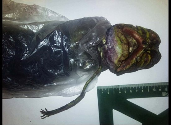 Woman In Russia Hides Extraterrestrial In The Fridge