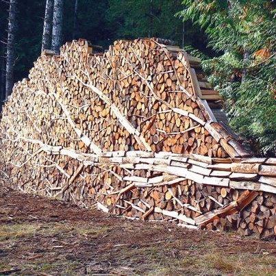 Tree wood pile