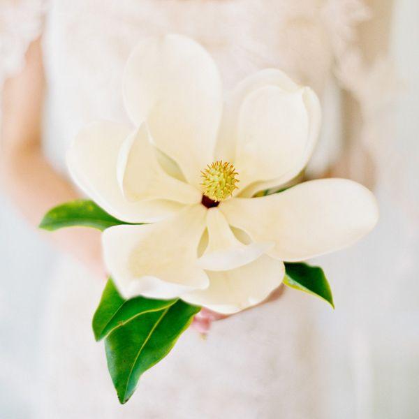 magnolia white wedding magnolias wedding ideas wedding. Black Bedroom Furniture Sets. Home Design Ideas