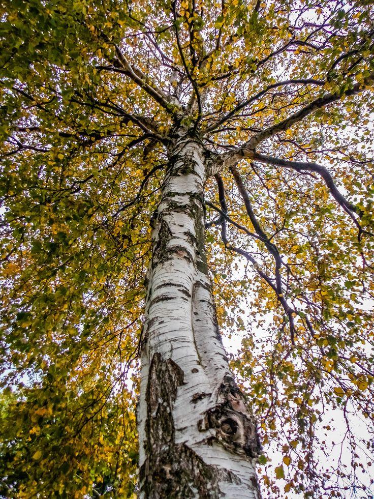 Tree umbrella - null