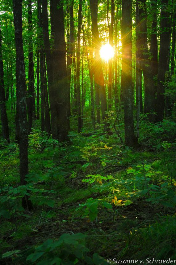The sun light poking through trees in a summer forest in northern Wisconsin. The perfect wall decor in a cabin or a place for relaxation or