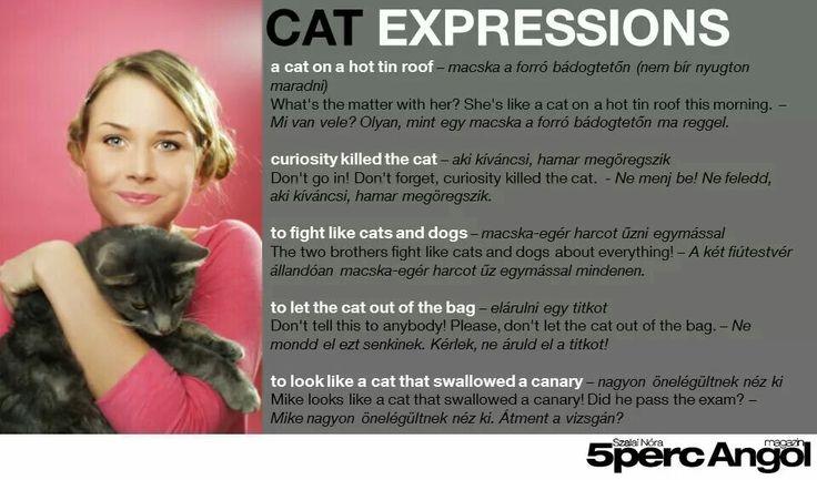 macska harcot a know