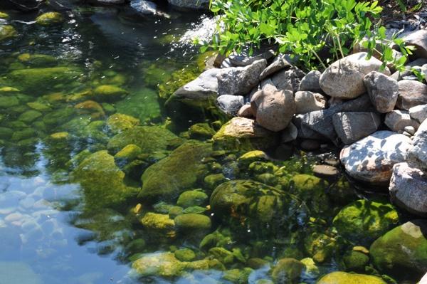 Fish In Backyard Pond Crossword :  on Pinterest  Gardens, Vertical vegetable gardens and Backyard ponds
