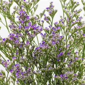 LIMONIUM CORONA DEEP BLUE - Garden Express