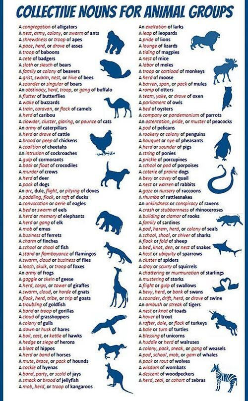 Collective nouns for animals. I mean this could be useful right? Everyone needs to know these at one point or another...Okay maybe I won't ever need it but it will be there if I do. Stop judging me.