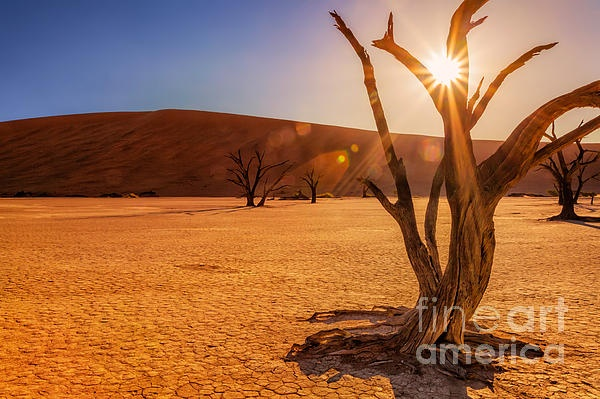 Dead Vlei, Namibia  ...a forest frozen in time....a graveyard of 900-year-old tree skeletons   Dead Vlei means dead marsh or lake, a white clay pan situated in the salt pan of Sossusvlei, in Namibia.