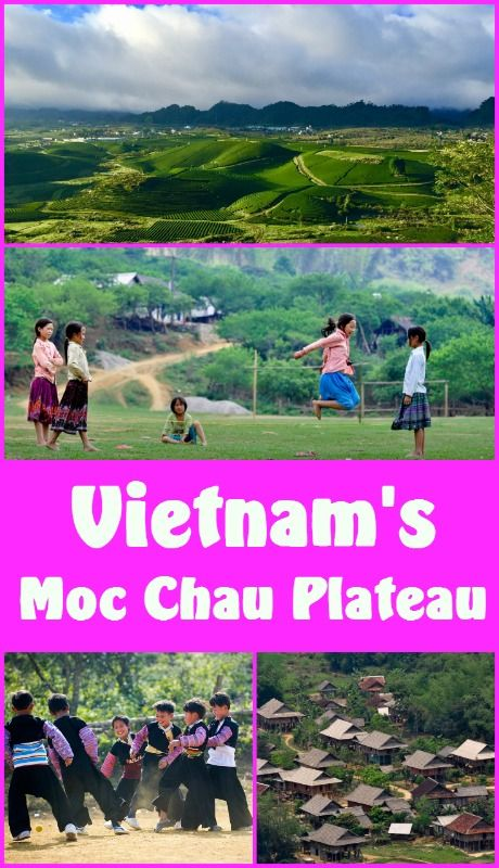 Moc Chau lies among a vast range of mountains and green fields. It has been dubbed a paradise of flowers. You must see it!