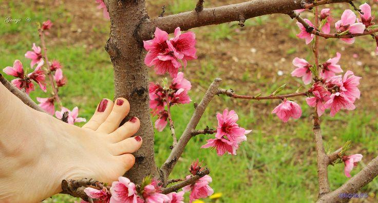 https://flic.kr/p/UnEvhp | a Spring in your step | a Spring in your step A perfect blossom ******************. Το κάθε βήμα σου, ανοιξιάτικες πνοές  μέσα στις ανθισμένες κερασιές . Στα κλαριά των δέντρων τα ακροδάχτυλα σου αγγίζουν τα γλυκά άνθη  της  πρωτομαγιάς,     η ομορφιά σου παίρνει ένα κομμάτι της .