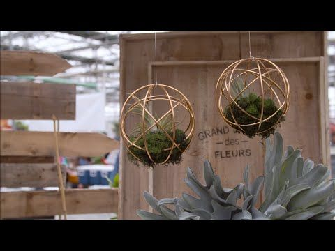 In this week's #TerraHowTo Tamara shows us how to add some trendy style to any room with hanging air plants!