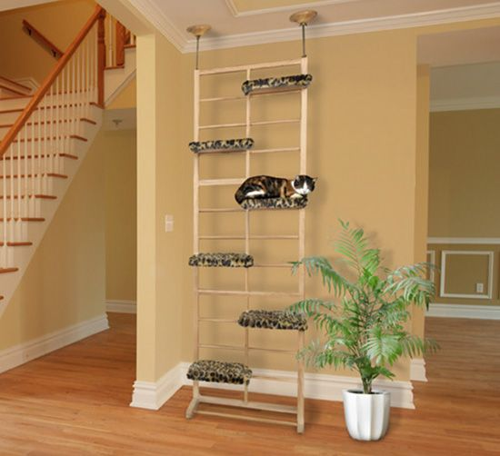 233 best images about cat shelves condos trees perches for Bookshelf cat tower