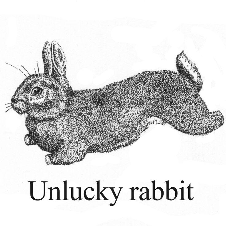 Unlucky rabbit.