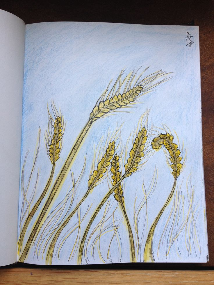 This drawing was inspired by the story of the widow Ruth in the Bible, when she trust's God and her mother in law Naomi, and gleans in the wheat fields of Boaz.