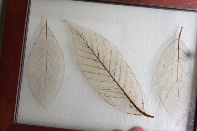25 Unique Leaf Skeleton Ideas On Pinterest Arm And