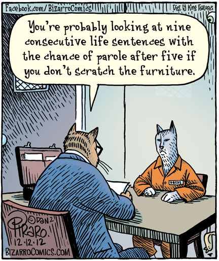 345 Best Images About Bizarro World On Pinterest Jokes