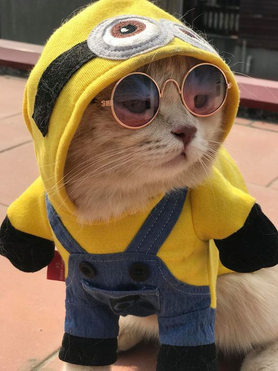 Minion Cat Photos