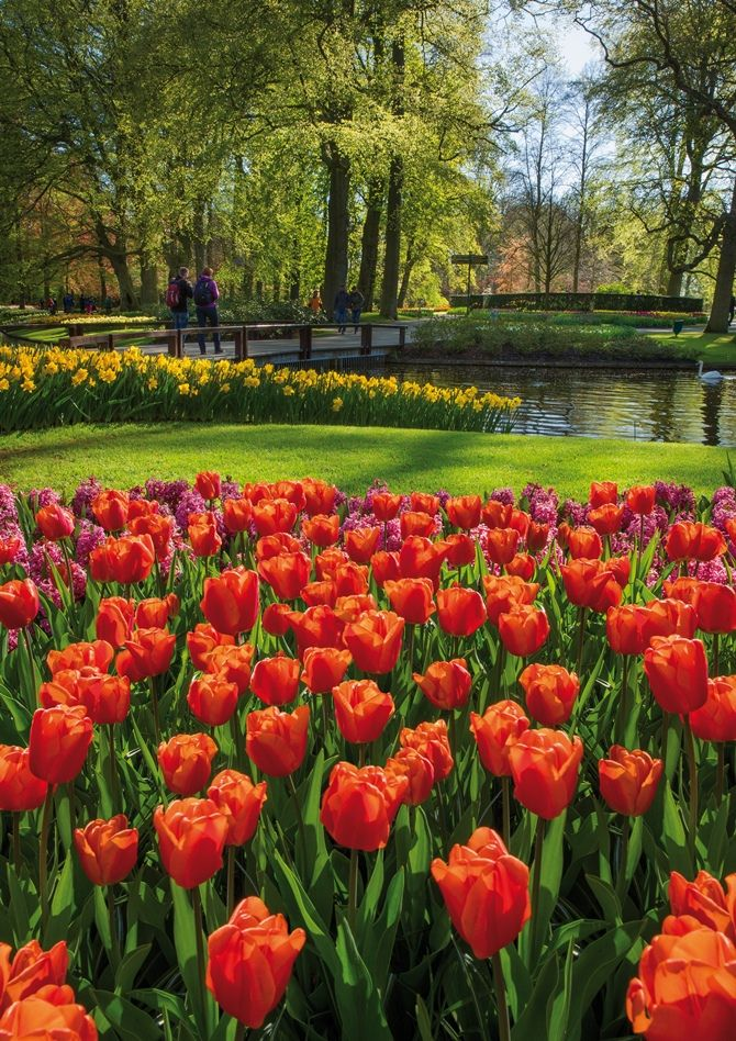 Seeing the tulips in Amsterdam at Keukenhof is a must!