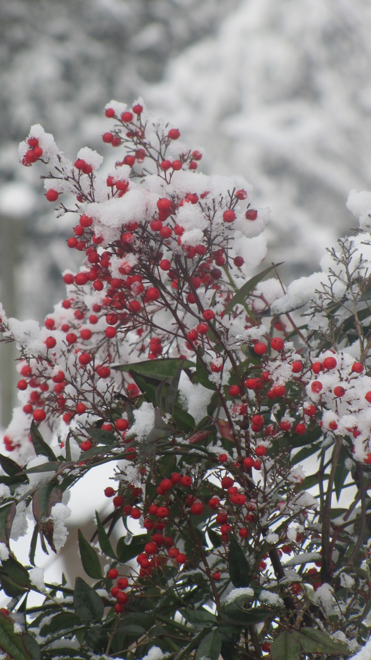 120 best snow and berries images on pinterest winter winter