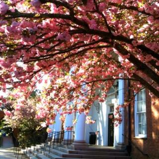 Springtime on campus of Converse College, Spartanburg, SC: Caroline 70 96, Southern Sweetness, College, South Carolina Yeah, Sc Porch Swing I, Place, Sc Hub City, Southcarolina Native