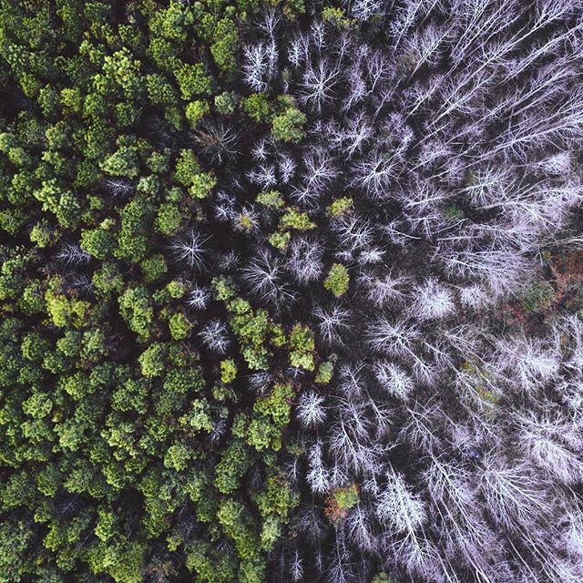 Check out this stunning drone shot captured by our friend, @micahjmarshall. He was flying above the state border at Moyock, North Carolina and Chesapeake, Virginia when he noticed that half of the trees were still green, and the other half had no leaves at all. This view offers a beautiful reminder that there are always new perspectives to discover, even when we don't expect to find anything at all.