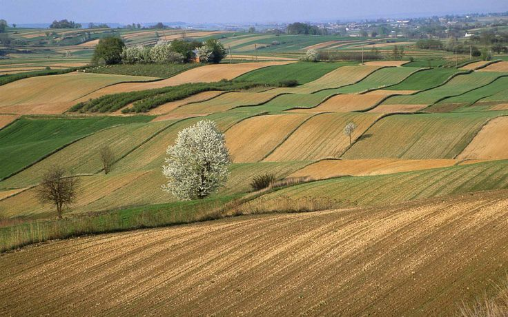 An organic farm in the Roztocze region of Poland