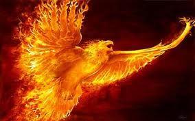 Image result for phoenix bird