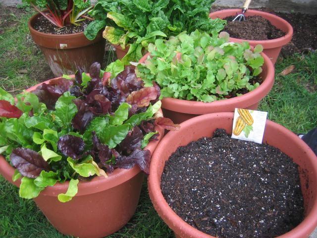 Making and using compost black gold for your garden soil for Black garden soil