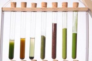 algaepigments