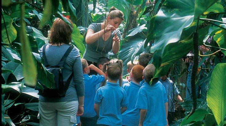 A group of children gathered at The Living Rainforest