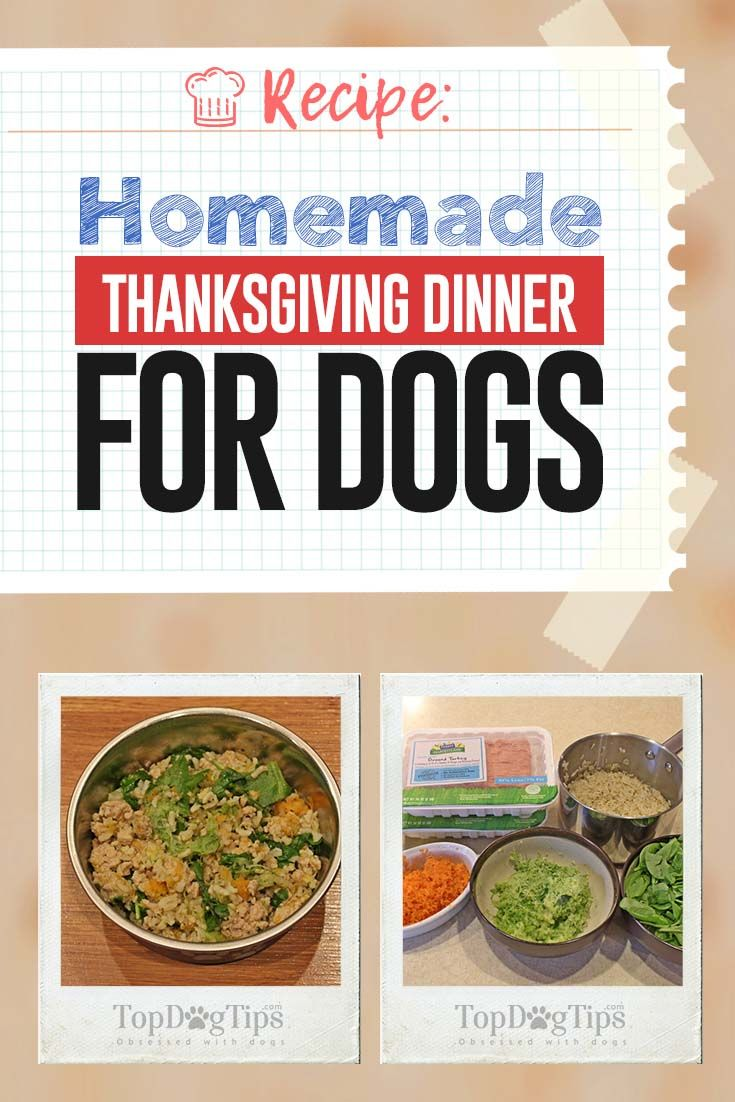 Recipe Homemade Thanksgiving Dinner For Dogs Dog Food Recipes