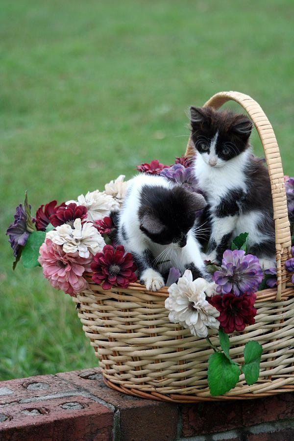 .kittens in a basket of flowers!