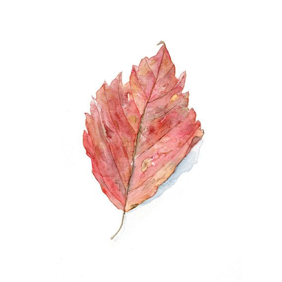 Leaf Watercolor - Art Print (Kathleen Maunder)