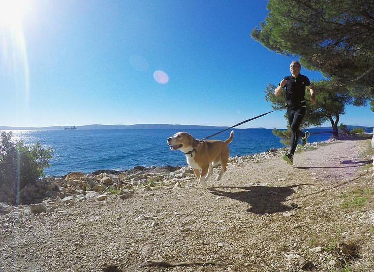 В начале забега я его тяну. В конце он набирает темп и я уже не успеваю.  :) Screenshot from #GoProHERO4  footage... #run #joggers #jogging #creativephototeam #dog #beagle #sport #morningjog #sport #gopro #goprohero4 #runner #canicross #stockphoto #travel