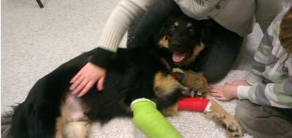Hero Dog Geo Throws Himself in Front of a Truck to Save a Boy   Dogster