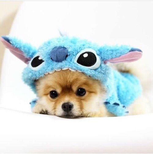 Dog in costume cute animals dog puppy pets