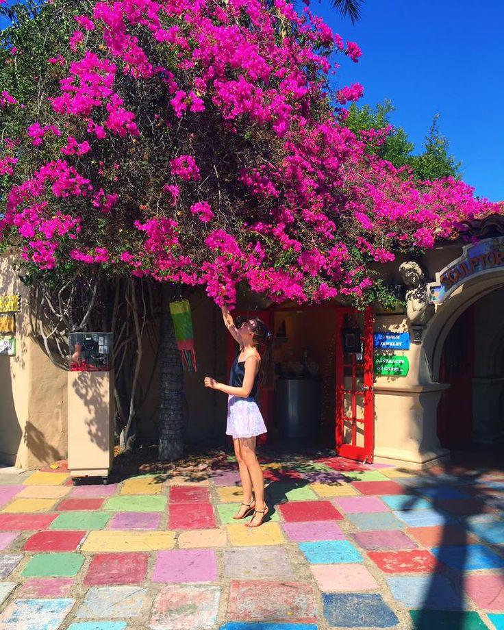 travel, san diego, balboa park, blogger, travelblogger, california, magic, trees, nature, blossom, stylestalker