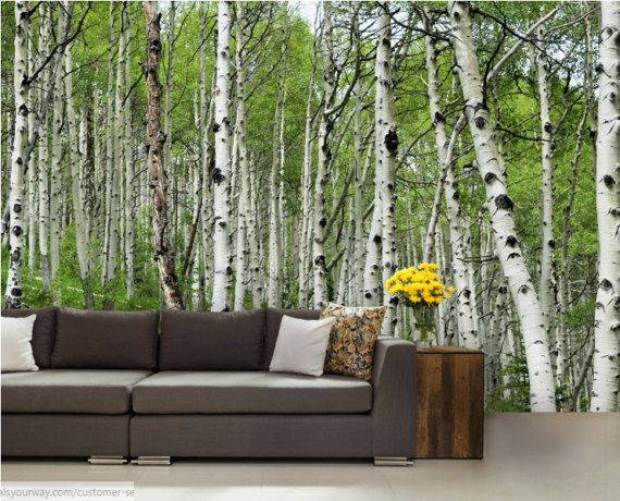 78 ideas about birch tree mural on pinterest painted for Birch tree wallpaper mural