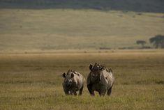 Passage To Africa - Ngorongoro Highlands - Tanzania #Rhino