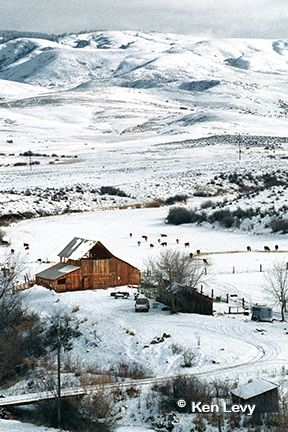 Old barn with snow all around. Lovely, it speaks to me of cowboys, farmers and life.